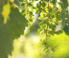 Праздничная весенняя дегустация вин Arba Wine