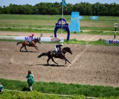 Скачки на Алматинском Ипподроме