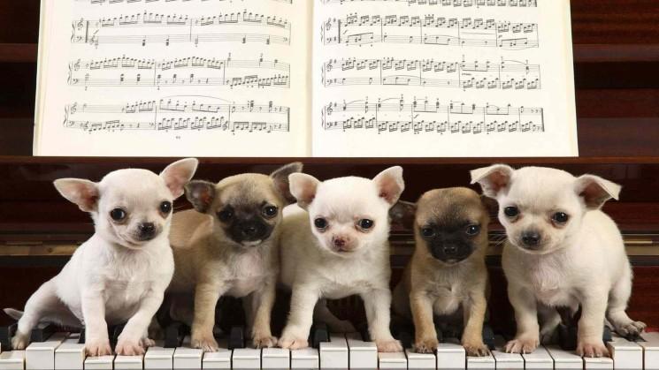 Концерт для детей «Карнавал животных»