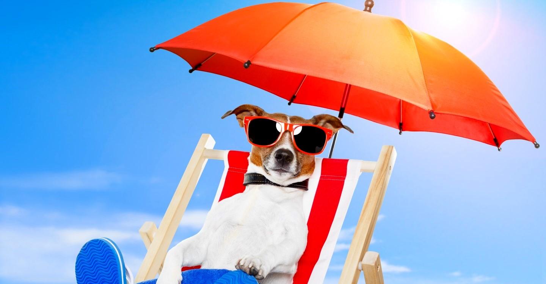Днем, картинки про лето с приколом