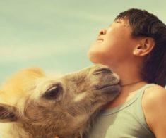 Показ фильма «Небесный верблюд»