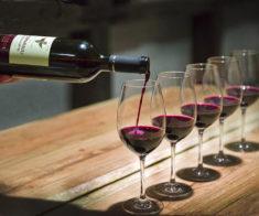 Дегустация Лафит — «Вино Короля»