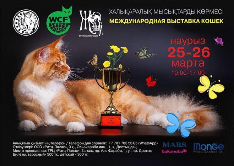 Международная выставка кошек Весенний АлмаКот