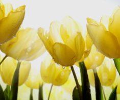 Спектакль «Путешествие в Наурыз или Легенда о тюльпане»
