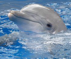 Алматинский Дельфинарий «НЕМО»