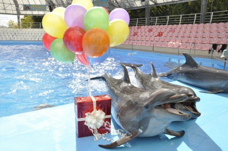 Праздник в дельфинарии