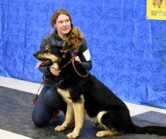 Международная выставка собак «Азия Престиж»