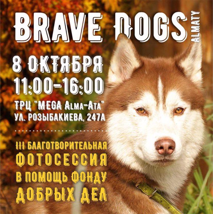 """Благотворительная фотосессия команды """"Brave Dogs Almaty""""."""