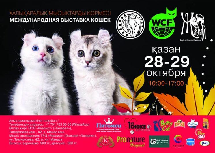 """Выставка кошек Осенний """"АлмаКот-2017"""""""