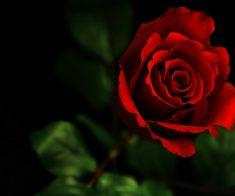 Медитативная терапия «Mystic Rose»