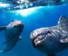 Новогодняя сказка в дельфинарии «Немо»