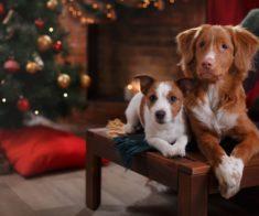 Праздник «Год Собаки – год Любви и Дружбы!»