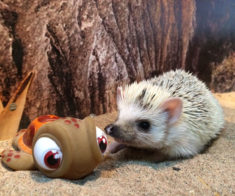 Выставка экзотических животных в Зоопарке «Живая Экзотика»