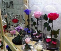Студия «Особые Цветы»