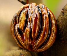 Выставка «Семена Жизни»
