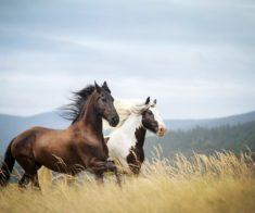 5 мест в Алматы, где можно покататься на лошадях
