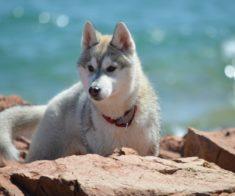V Юбилейная Благотворительная Фотосессия с Brave Dogs Almaty
