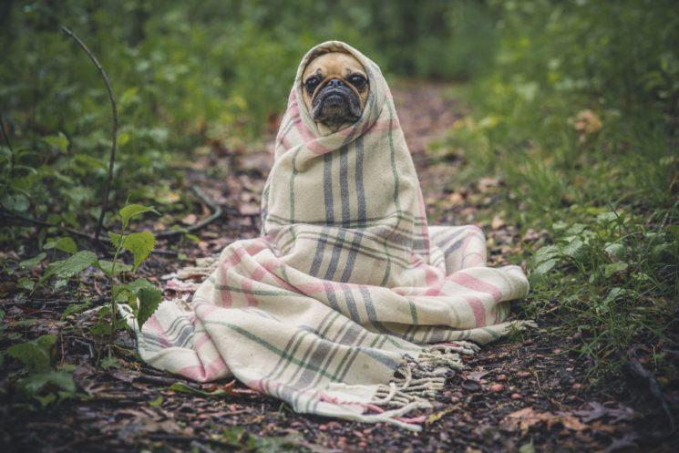 warm-leaf-flower-puppy-dog-animal-718747-pxhere-com