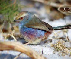 Фотовыставка «Птицы Тянь-Шаня»