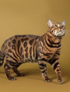 Международная выставка кошек «Кубок Азии»