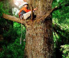 Показ фильма «Работа с деревом»