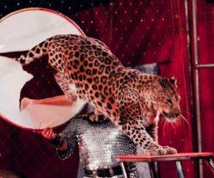Новосибирский цирк «Золотой Дракон»