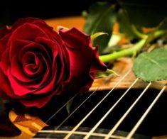 Концерт «Реабилитация зимней розы»