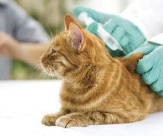 Ветеринарная конференция «Кошкин День»