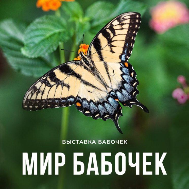 Выставка «Мир бабочек»