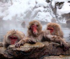 Где поплавать зимой: 7 мест в Алматы
