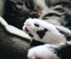 Планета кошек и зоо-шоу