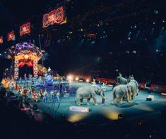 Шоу «Карнавал слонов»