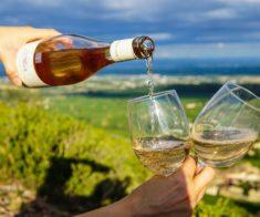 Базовый курс сомелье и винных специалистов