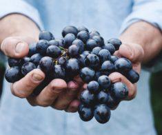 Семинар «Легенды Итальянского виноделия»