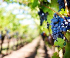 Лекция «Вина Испании. Исторические винные регионы»