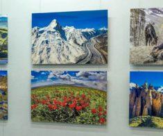 Выставка «Пейзажи и дикие животные Казахстана»