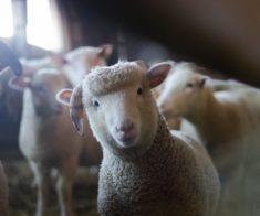 Курбан-Айт: места для забоя и покупки животных