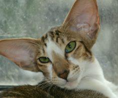 Выставка «Планета кошек»