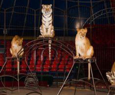 Цирковое представление «Империя хищников»