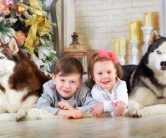 Фотосессия с собаками хаски