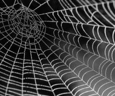Выставка тропических пауков