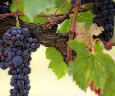 Салон австрийских вин