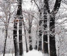Зимнее преображение окрестностей Алматы