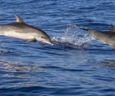 Киновстреча «Мы и дельфины»