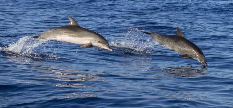 """Киновстреча """"Мы и дельфины"""""""