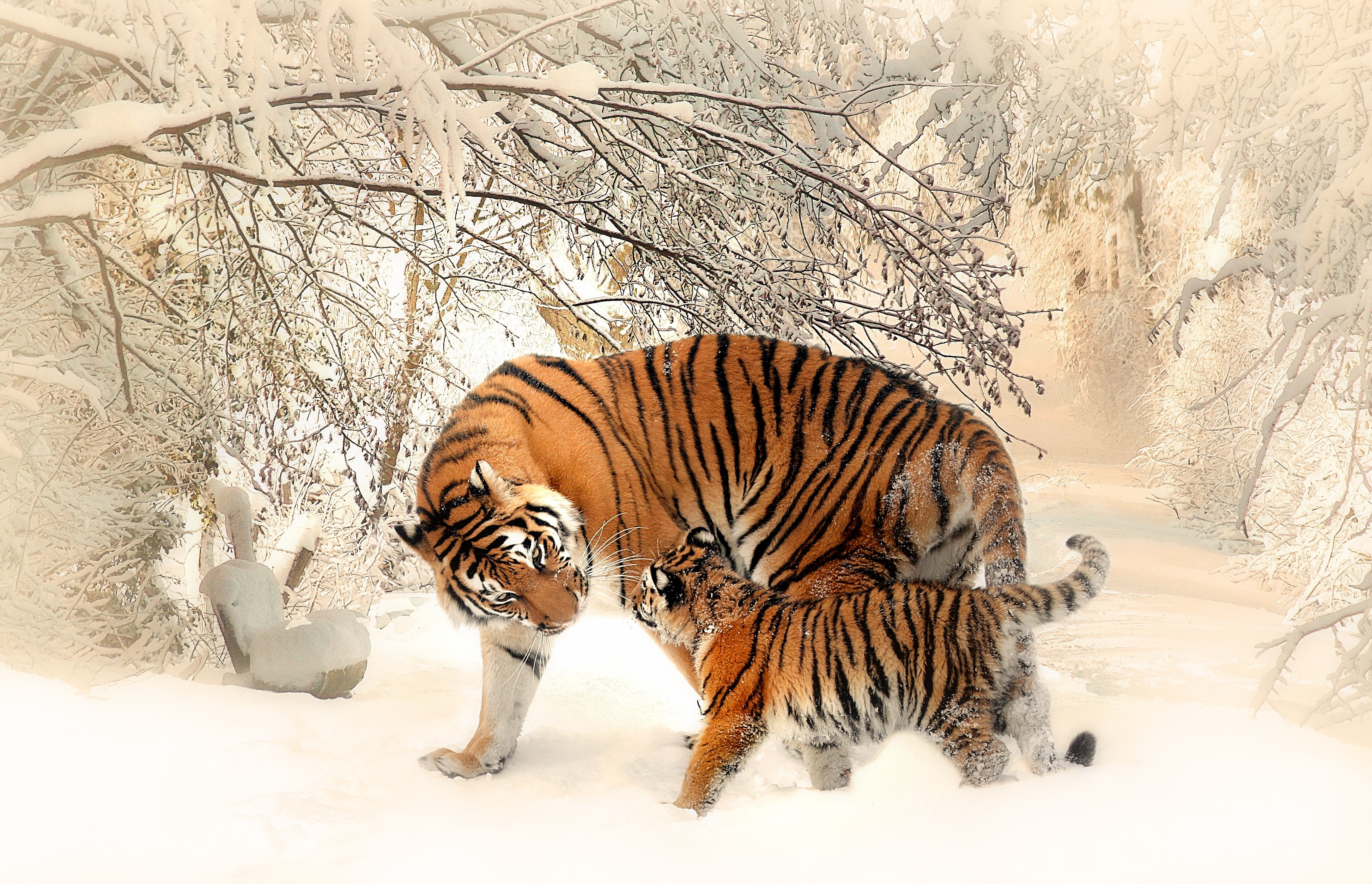 adult-and-cub-tiger-on-snowfield-near-bare-trees-39629