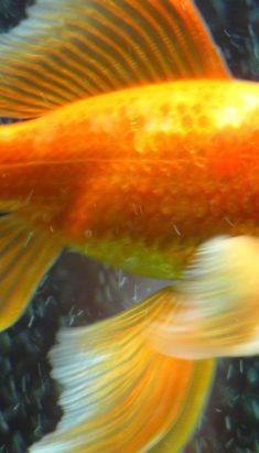 Онлайн-трансляция спектакля «Сказка о Золотой рыбке»