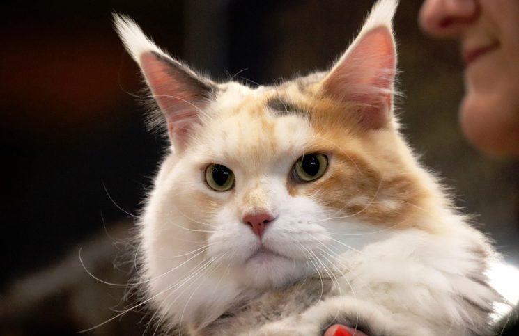 Онлайн-выставка кошек Summer Cat Show