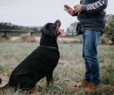 Как правильно вести себя с животными: в зоопарке, на улице и дома