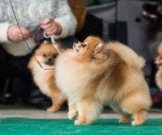 Национальная выставка собак